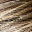 Background Streaked hair. macro — Stock Photo