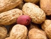 Jordnötter — Stockfoto