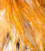 Feather — Stock fotografie