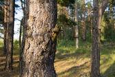 自然 — ストック写真