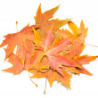 Autumn leaf — Stock Photo #37404059