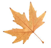 Beautiful autumn leaf — Stock Photo