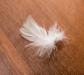 White feather on a wooden background — Stock Photo