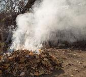 Smoke from burning leaves — Foto de Stock