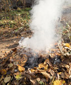 Smoke from burning leaves — Stock Photo