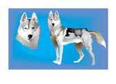 Siberian Huskies — Stock Vector