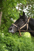 Horse on a background of foliage — Stok fotoğraf