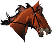 Racehorse head — Stock Vector