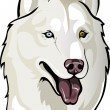 White husky — Stock Vector