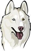 White husky — Vetor de Stock