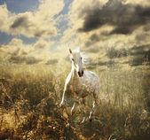 Caballo blanco en el prado — Foto de Stock