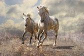 A pair of white horses — ストック写真