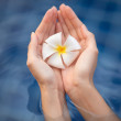 Tropical flower plumeria in woman hands — Stock Photo