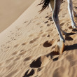 Camel legs walking in sand. — Stock Photo