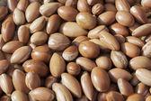 Argan nuts. — Stock Photo