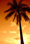 Tropical Sunset Paradise Palm — Stock Photo