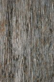 Grungy Wood — Foto Stock