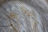 Cortar fundo madeira — Fotografia Stock