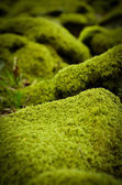 Mossy Stones — Stock Photo