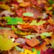 Colored Fall Leaves — Stock Photo