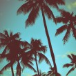 Vintage Tropical Palms — Stock Photo