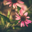 Stock Photo: Retro Styled Flowers
