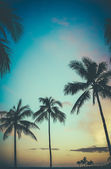 Hawaii Retro Sunset Palm Trees — Stock Photo