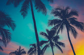 Hawaii Palm Trees At Sunset — Stock Photo