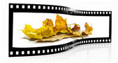осенние листья кинопленки, изолированные на белом фоне — Стоковое фото