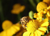Working bee — Photo