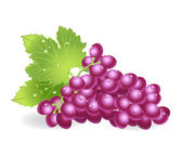 Grapes — Vetorial Stock