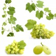 Green grapevine leaves and grapes collage - Stockfoto