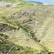 Stock Photo: Vineyars in Douro Valley, Portugal