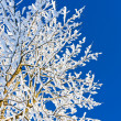 Stock Photo: Winter tree