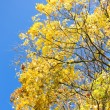 Stock Photo: Tree canopy in Autumn