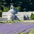 Senanque abbey with lavender field, Provence, France — Stock Photo #13586552