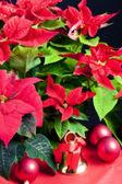 Jul stilleben med julstjärna — Stockfoto