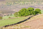 North York Moors National Park, North Yorkshire, England — Stock Photo