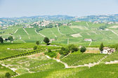 Vineyars near Barolo, Piedmont, Italy — Stock Photo