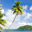 Batteaux Bay, Tobago — Stock Photo #17840499