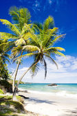 Cumana Bay, Trinidad — Stock Photo