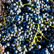 Stock Photo: Harvested grapevines, Douro Valley, Portugal