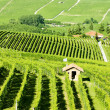 Stock Photo: Vineyars near Barolo, Piedmont, Italy