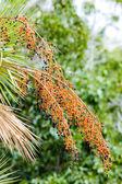 植被的大沼泽地国家公园,佛罗里达州,美国 — 图库照片