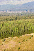Forest in Northumberland National Park, England — Stock Photo