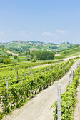Vineyars in Asti Region, Piedmont, Italy — Stock Photo