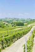 Vineyars in Asti Region, Piedmont, Italy — Stock Photo