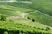 Vineyars near Barbaresco, Piedmont, Italy — Stock Photo