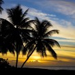 Stock Photo: Sunset over CaribbeSea, Turtle Beach, Tobago