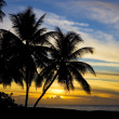 Sunset over Caribbean Sea, Turtle Beach, Tobago - Foto Stock